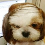 A dog with a combover hairstyle